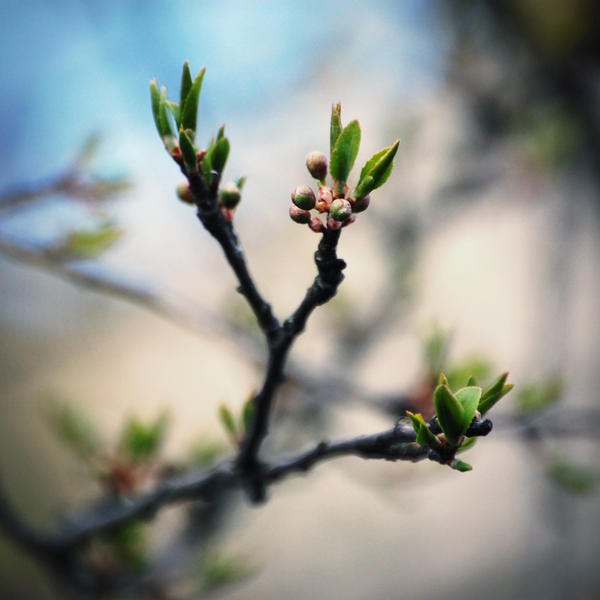 new life II by dosske