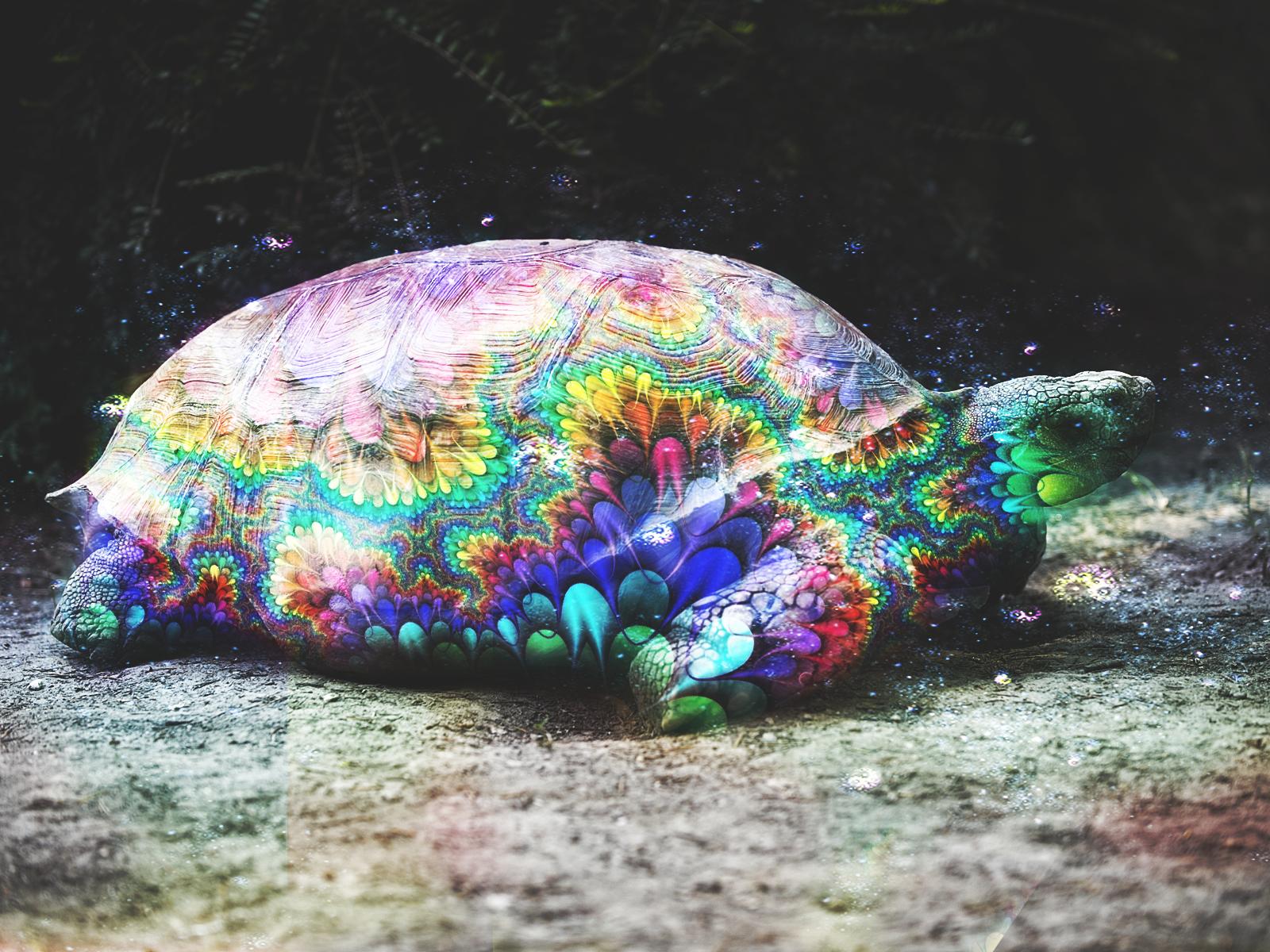 Trippy Turtle by Empyree on DeviantArt