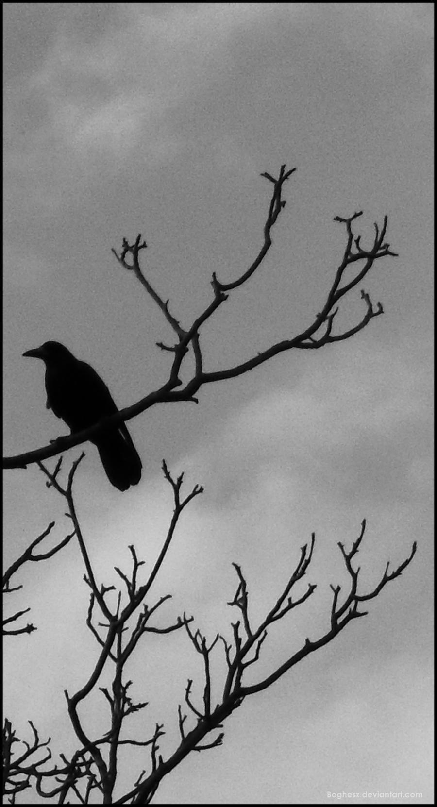 the watcher by Boghesz