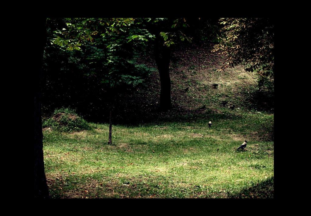 crows part II. by Boghesz