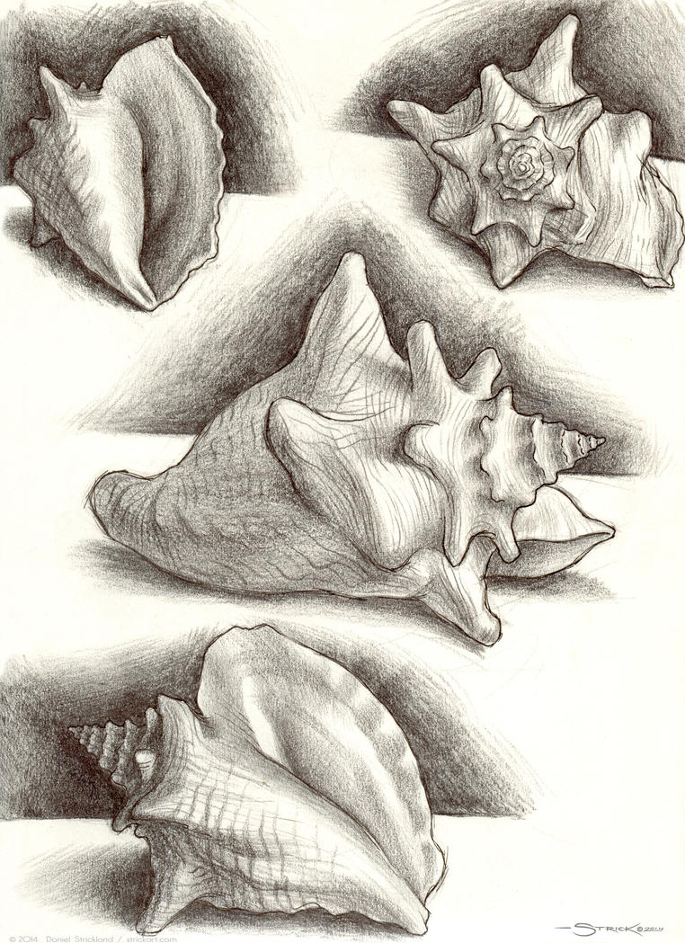 Conch sketch by strickart