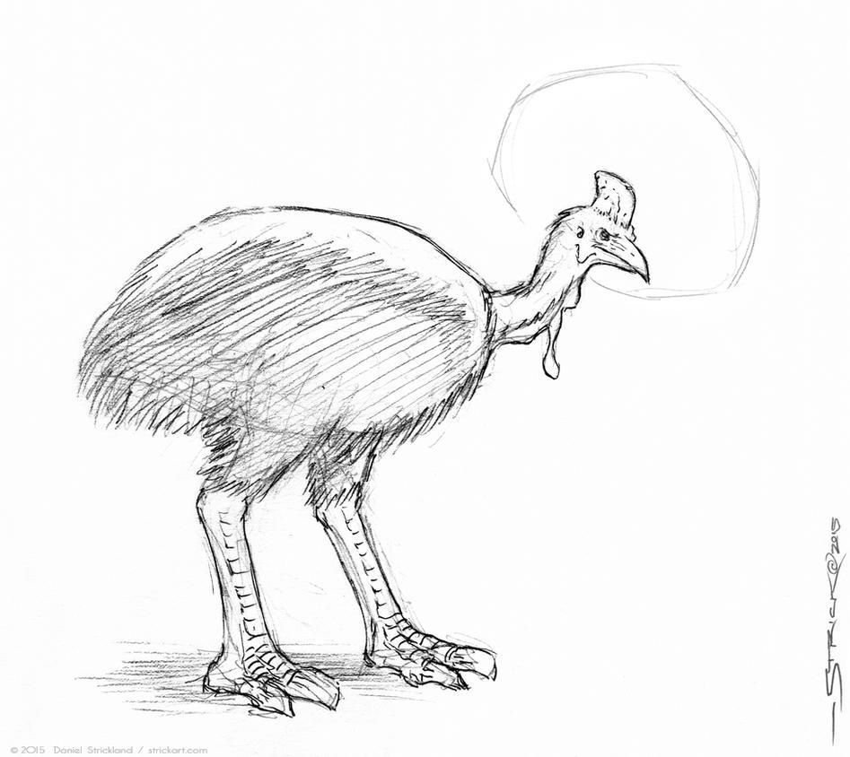 Cassowary sketch by strickart