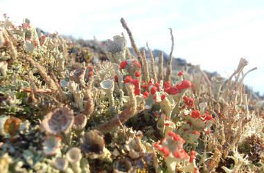 Lichen forest 1 by Zabbe1