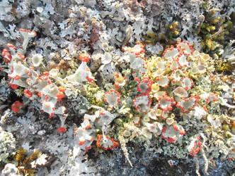 Lichen forest 2 by Zabbe1