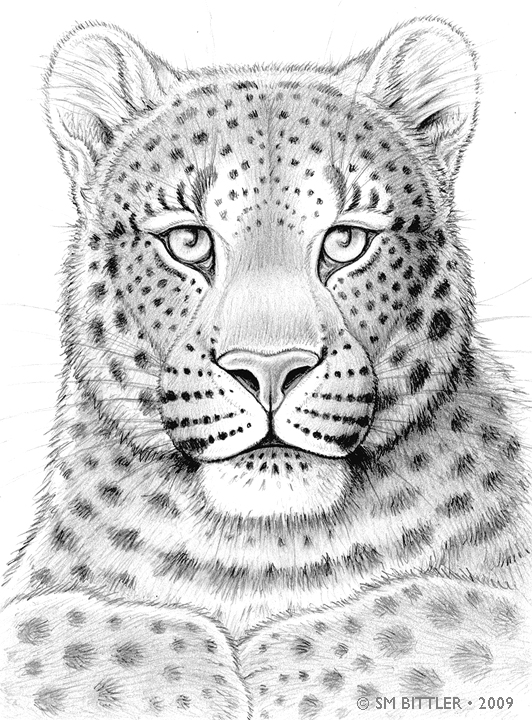 how to help amur leopards