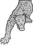 Wereleopard - Vector Art by synnabar