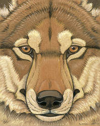 Prehistoric Series - Dire Wolf by synnabar