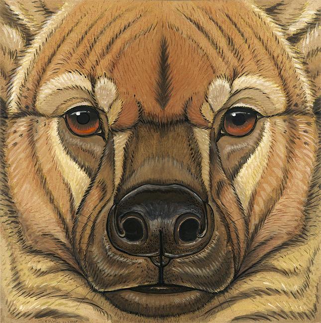 Prehistoric Series - Giant Hyena