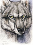ACEO - Wolf by synnabar