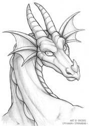 Wertle Dragon