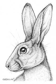 Belgian Hare for Thaily