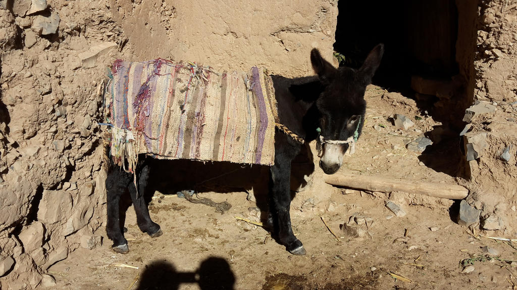 Black Donkey by Pit7