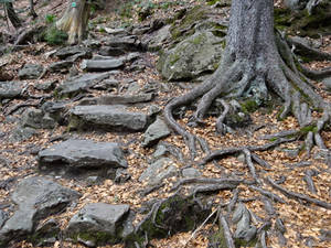 Stepping Stones _and_ Root Snakes