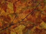 Fall Time 19