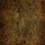 Antique Texture 31