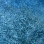 Season of Winter 5