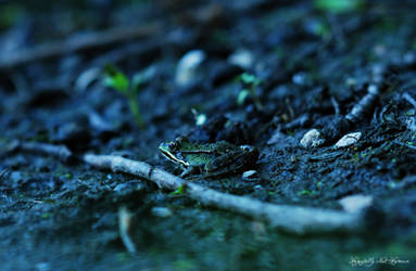 French Frog by Hopefully-not-human