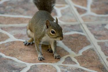 Just a squirrel, ma'am by gryen