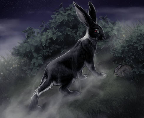 The Black Rabbit of Inle