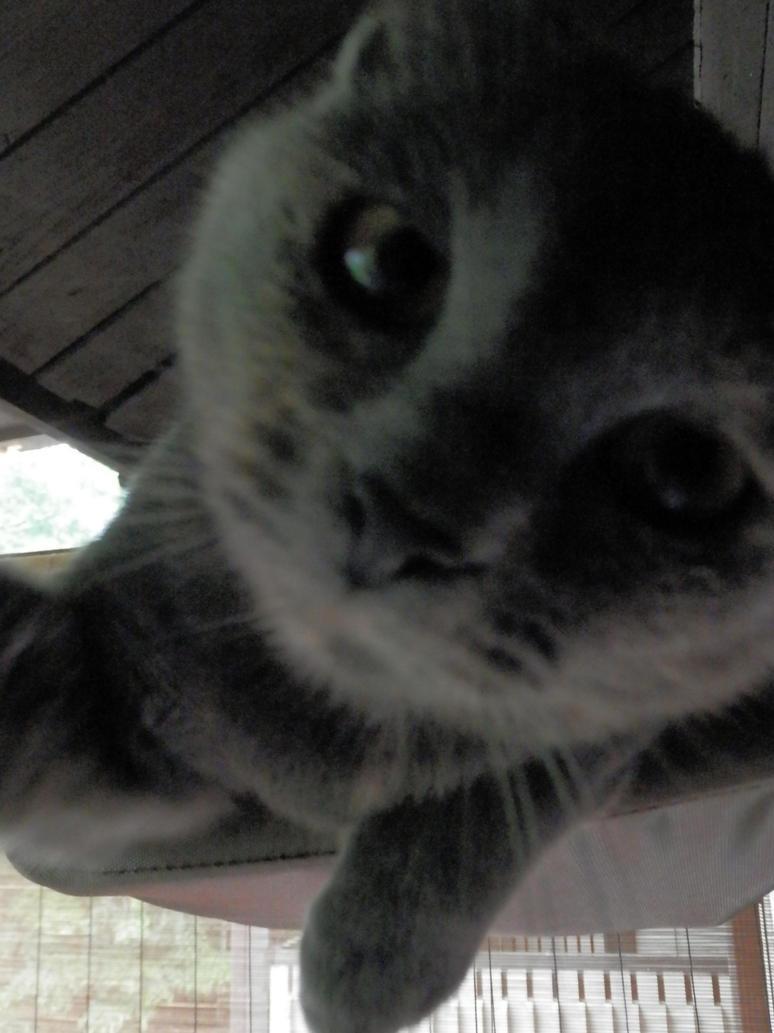 Kitten Selfie by wickedphoenix93