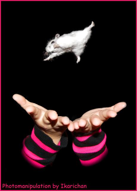 Flying hamster by ikarichan