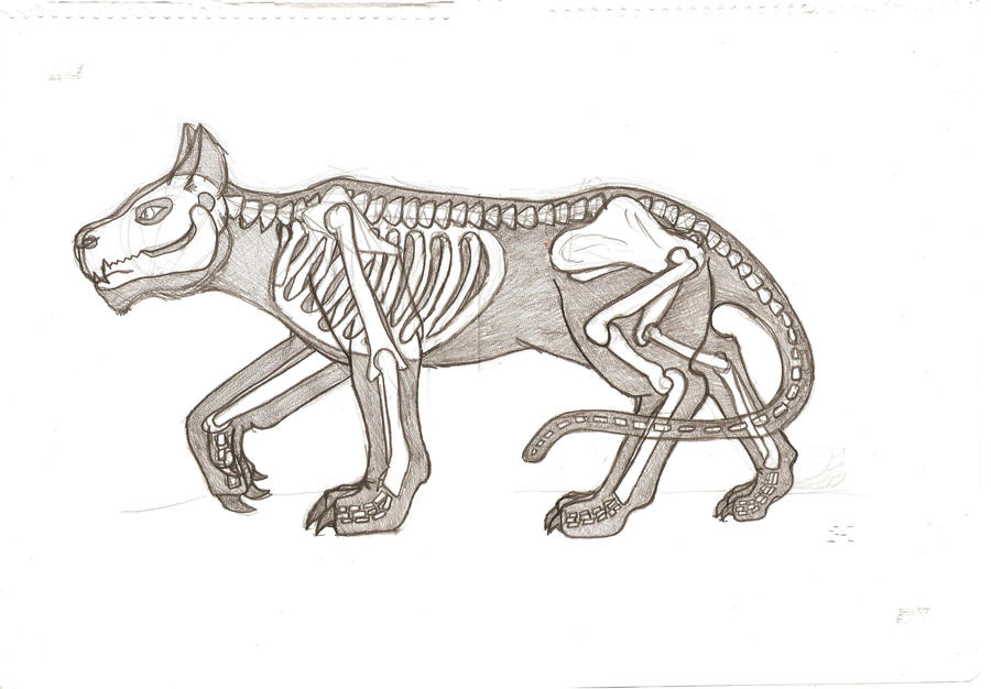 Cat Skeleton Drawing Cat Skeleton by Mythicwriting