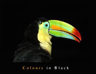 Colours in Black