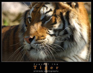 Eyes of the tiger 1 by pinkland