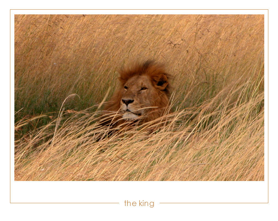 The King by pinkland