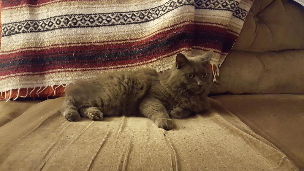 My proud cat! by blizzardbearer0617