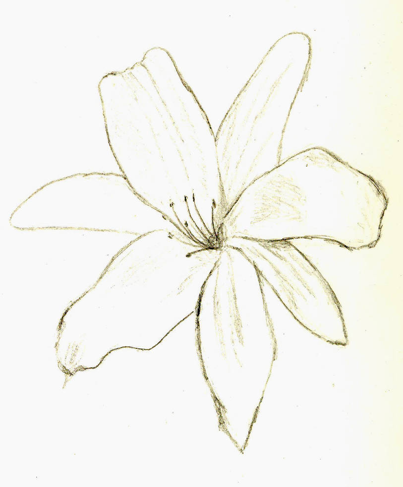 White Flower By Death In The Orchard On Deviantart