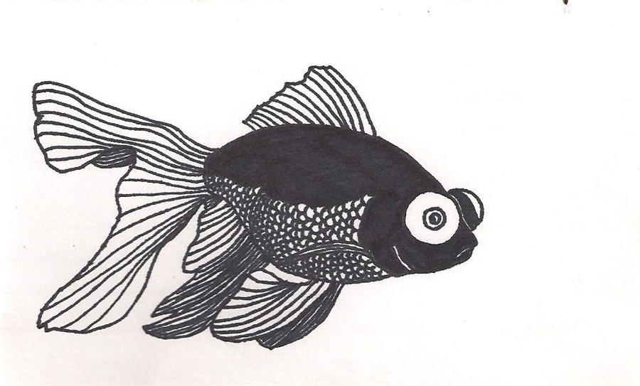 black moor goldfish by death in the orchard
