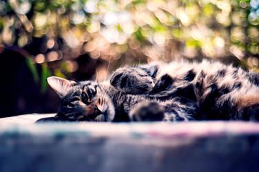 Ari by catlover