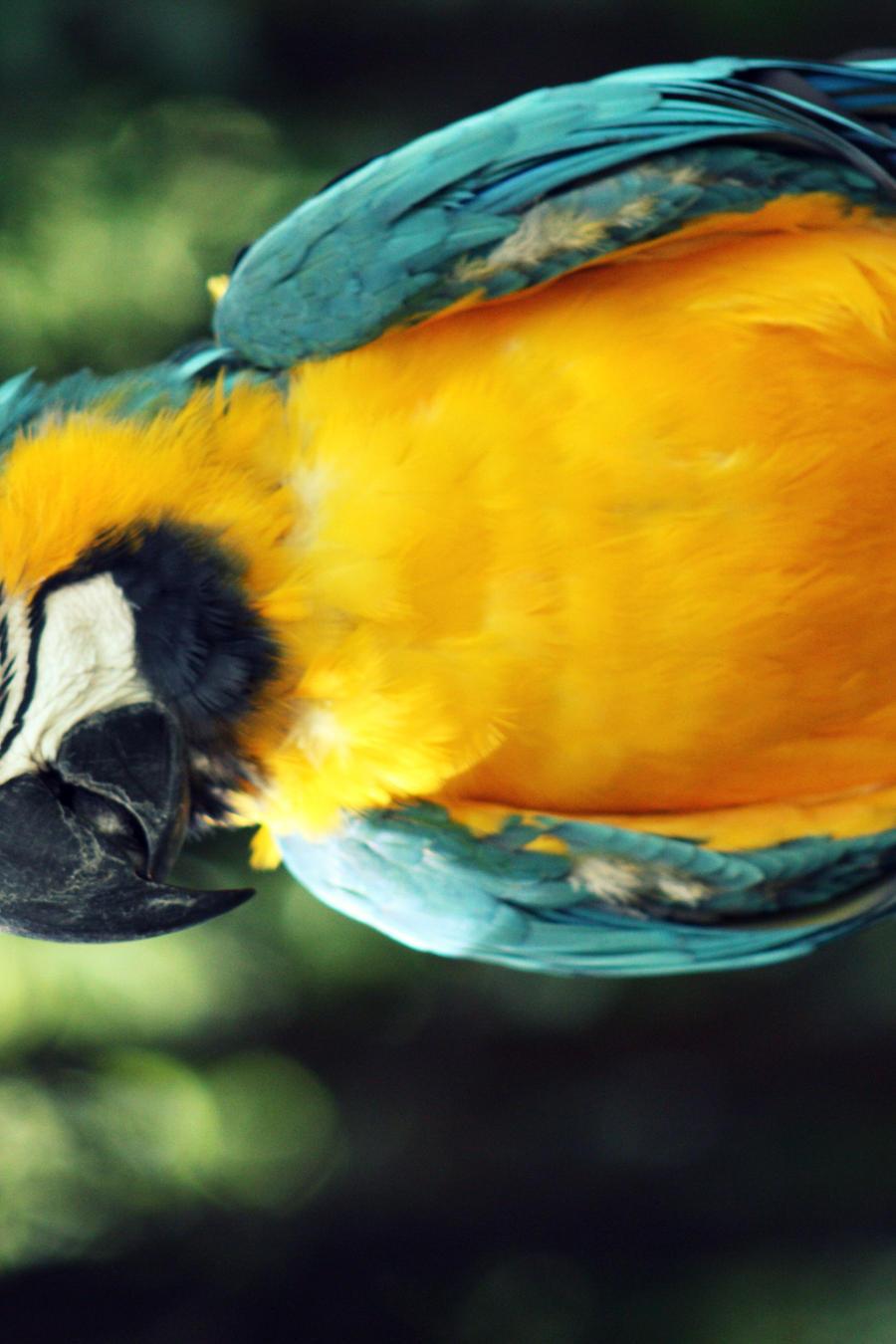 Macaw by kimberlyg