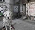 Poor Doggie Dog