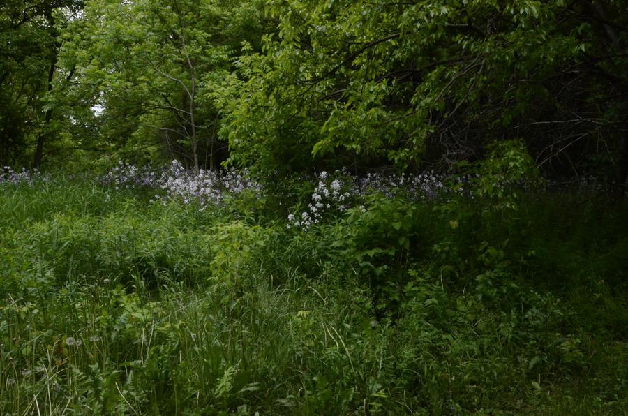 Field by RainyDoll-Stock