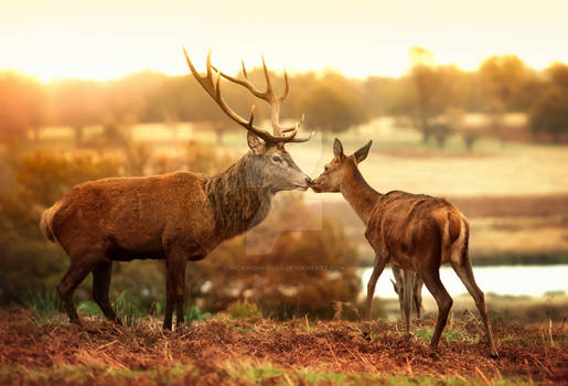 Autumn in Richmond Park, London