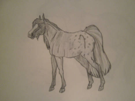 My Horse Char