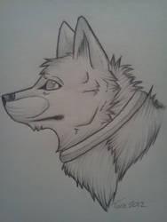 Dog w/ collar