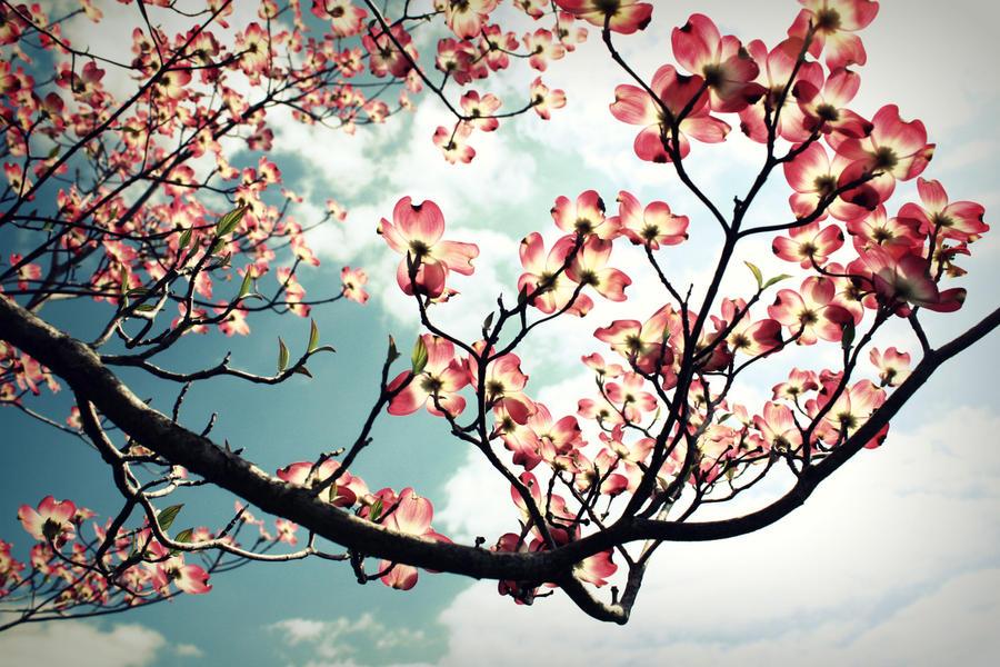 Beautiful Spring 4 by kita-hoshi