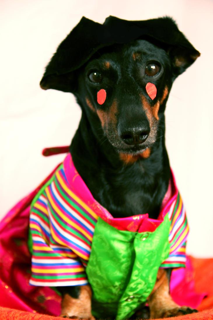 My Hanbok Pup 02 by kita-hoshi