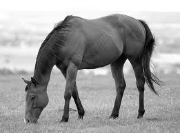Black and White Effect by JobyFromMyStable