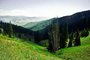 Yellowstone by burakseker