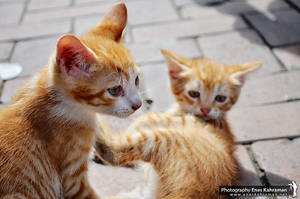 Twin Cats by khrmnens