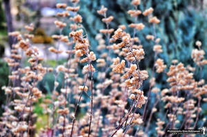 Colorful Flower by khrmnens