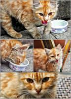 Wild Cat by khrmnens