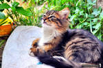 Colorful Cat III