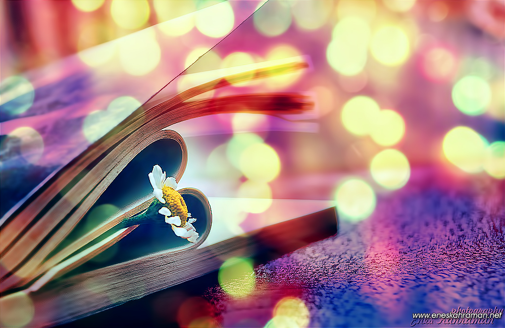 Magical Daisy with Book