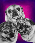 Commission Pugs by RG-Arts