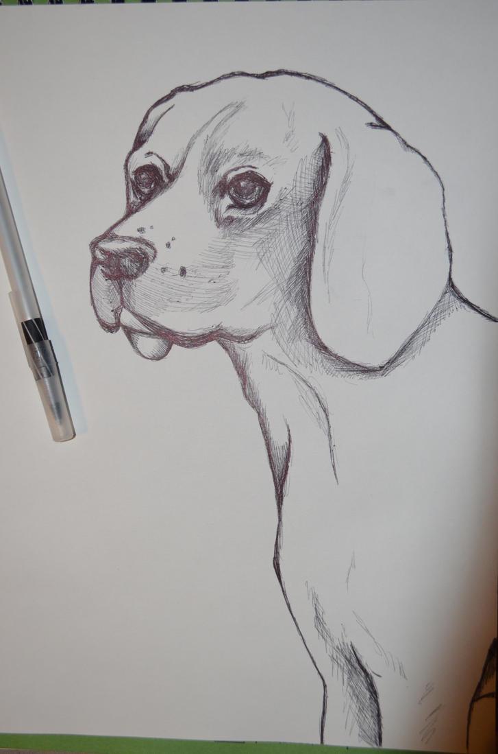 dog drawing by Ashleyissweet